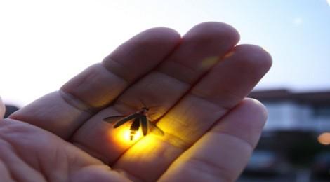 Milagres das pequenas coisas